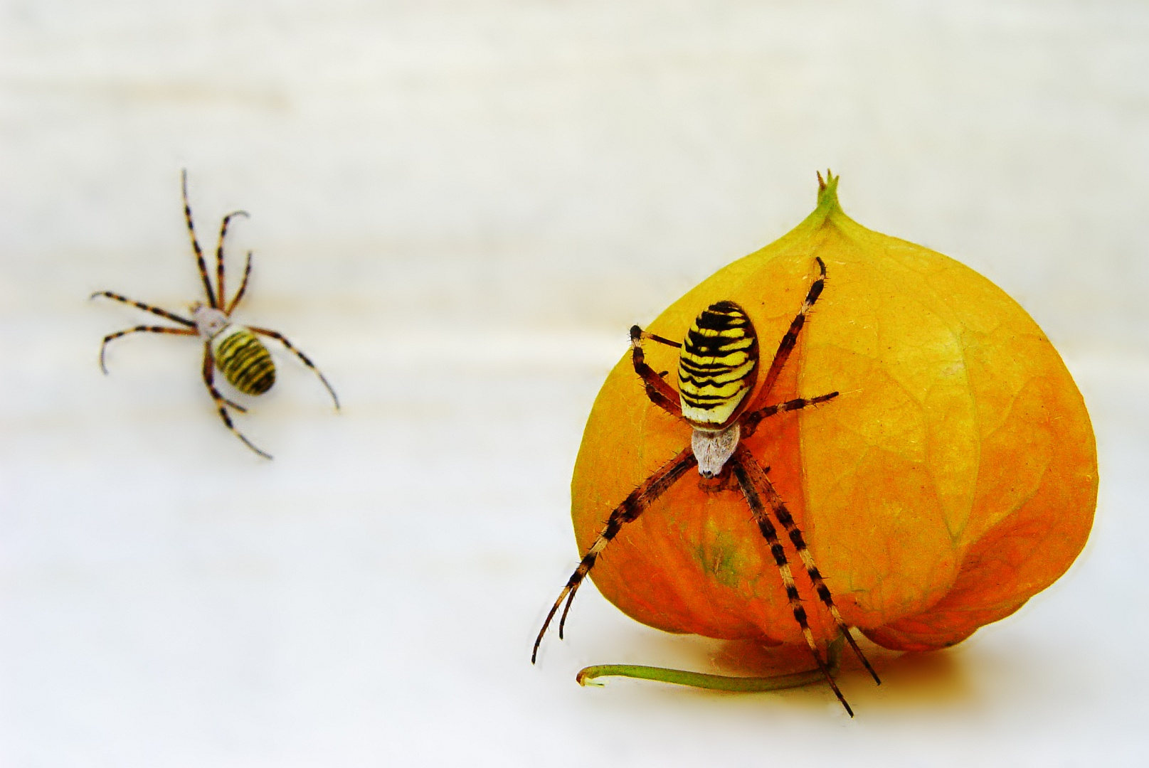 Twin Spiders