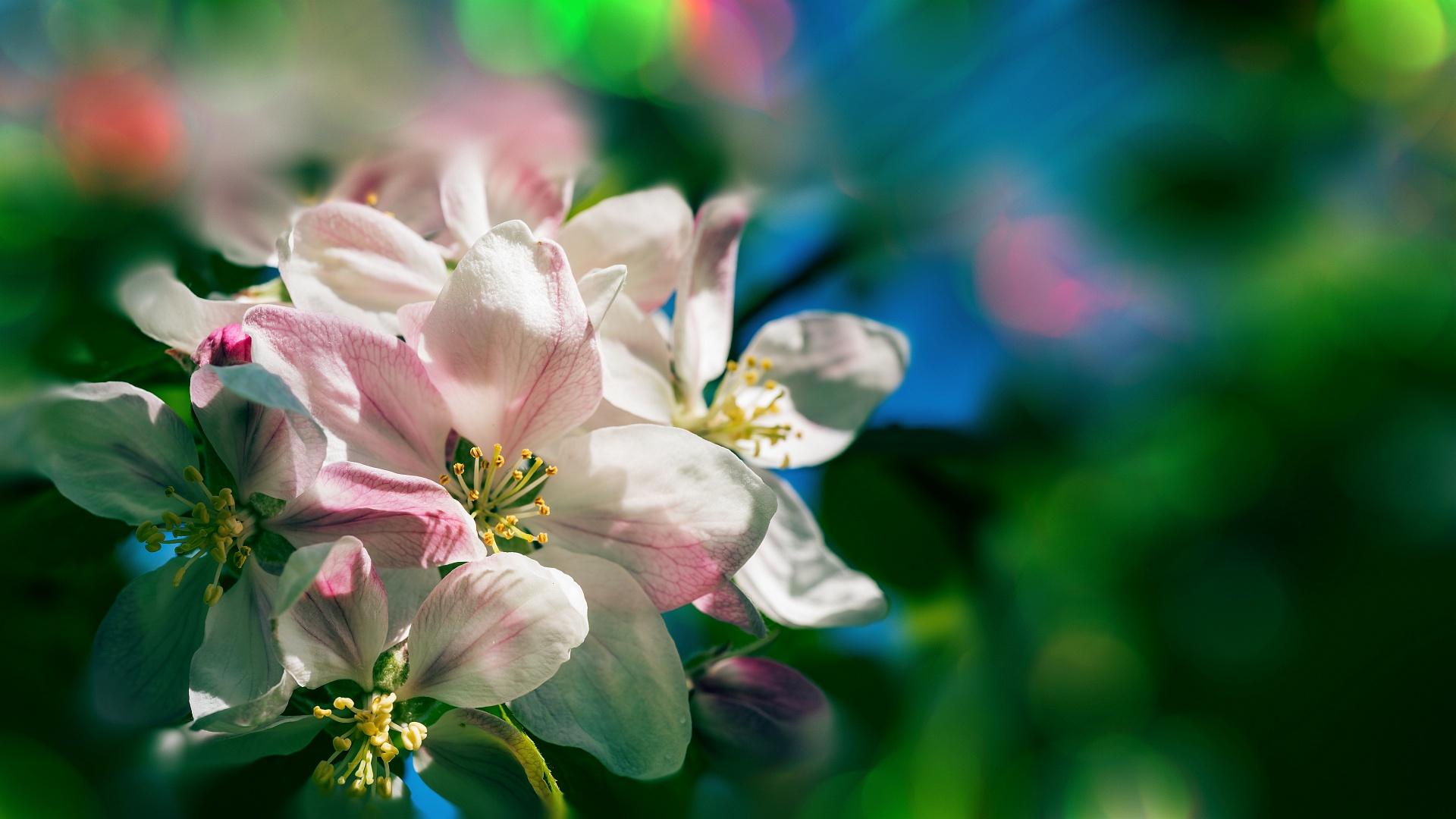 Spring Glorious!