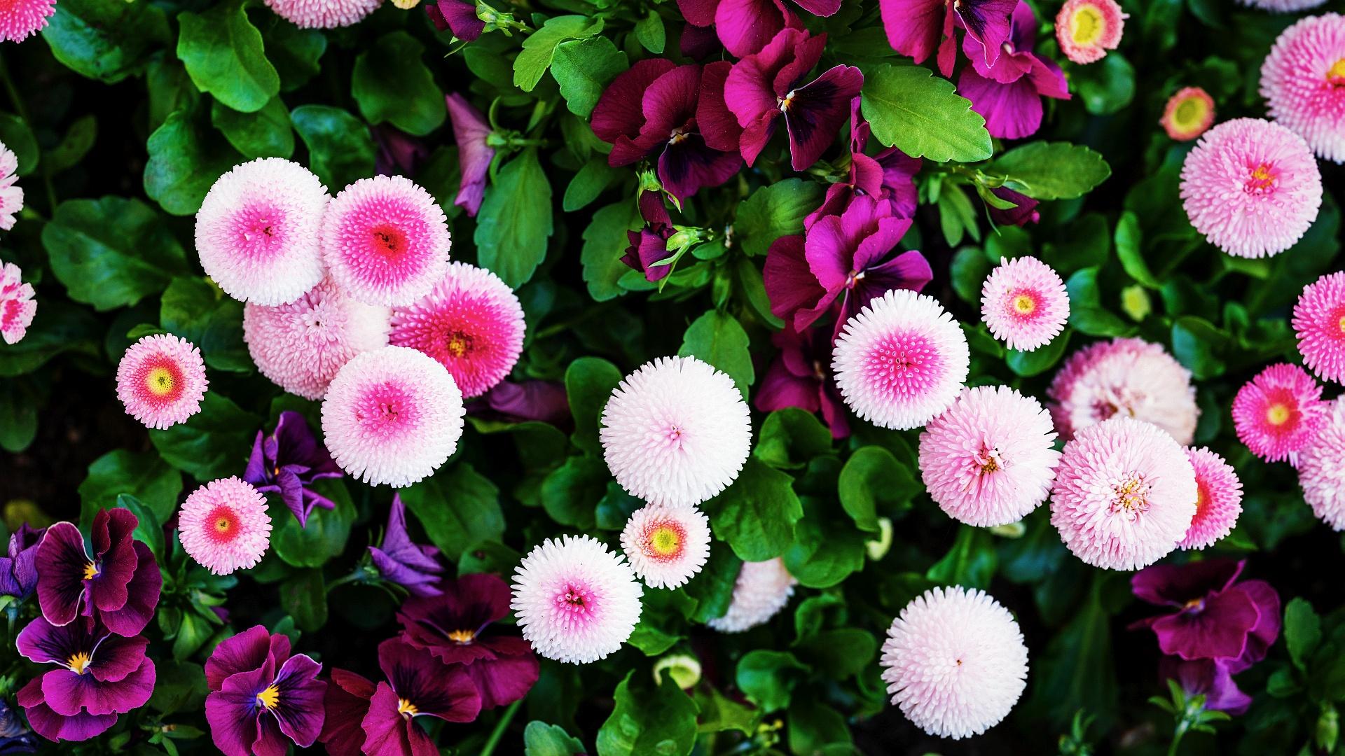 White Vs Pink