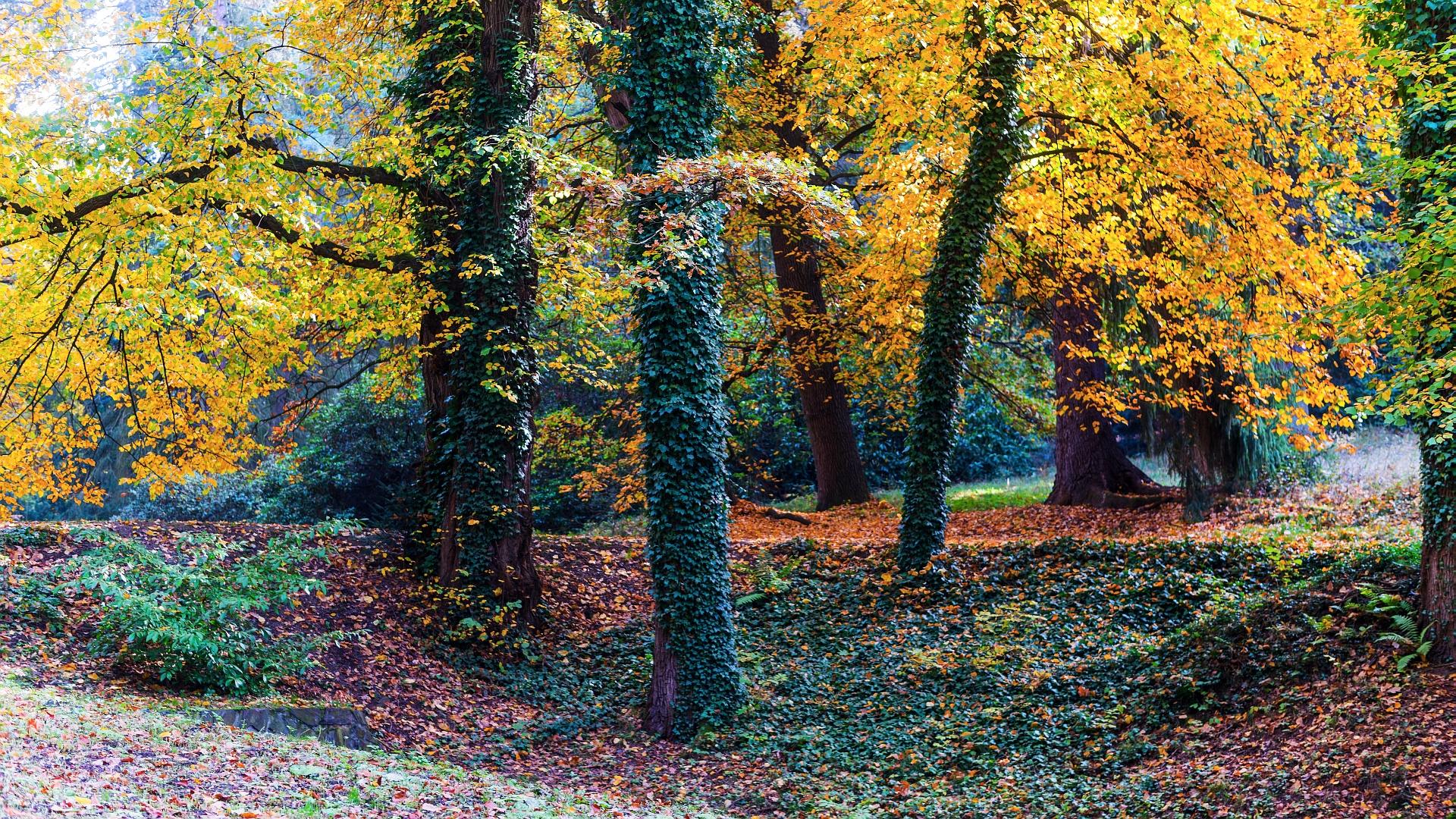 The Wood's Autumn Skin